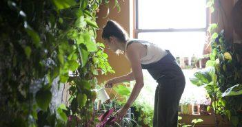 Visite privée: 500 plantes vertes cohabitent dans cet appartement