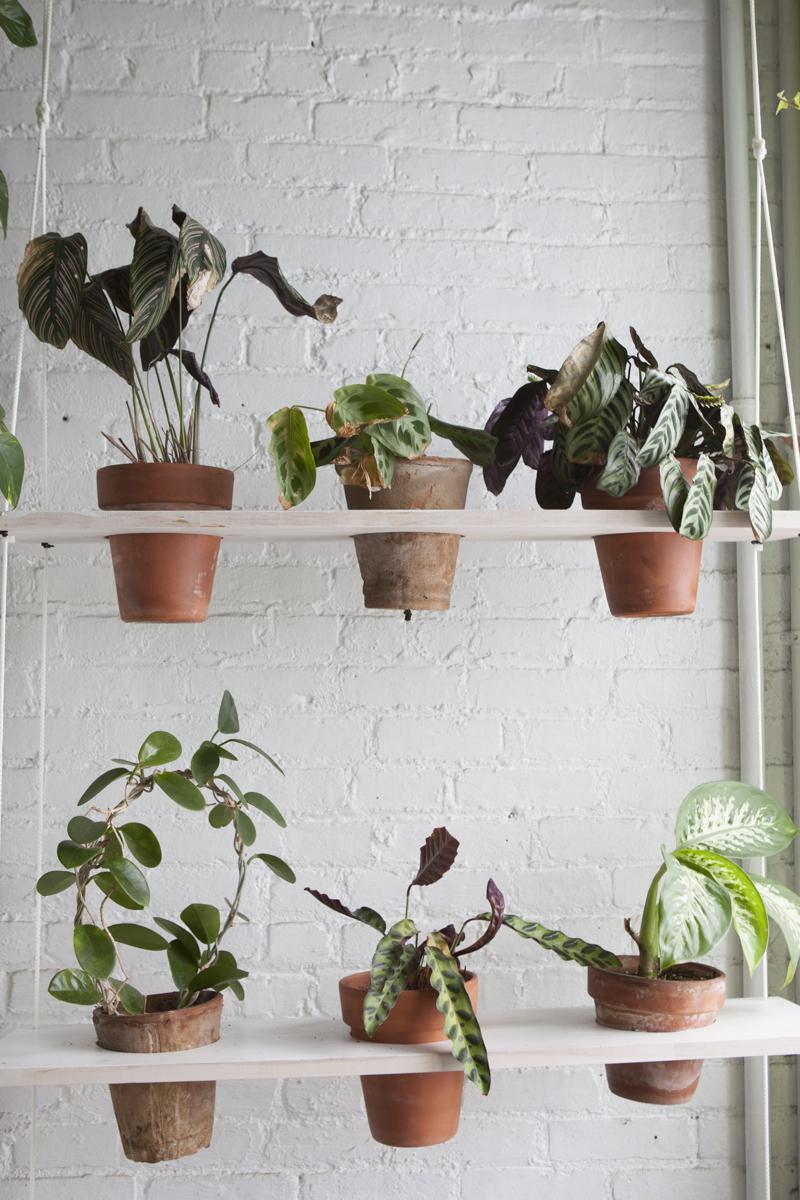 Visite priv e 500 plantes vertes cohabitent dans cet for Toutes les plantes vertes