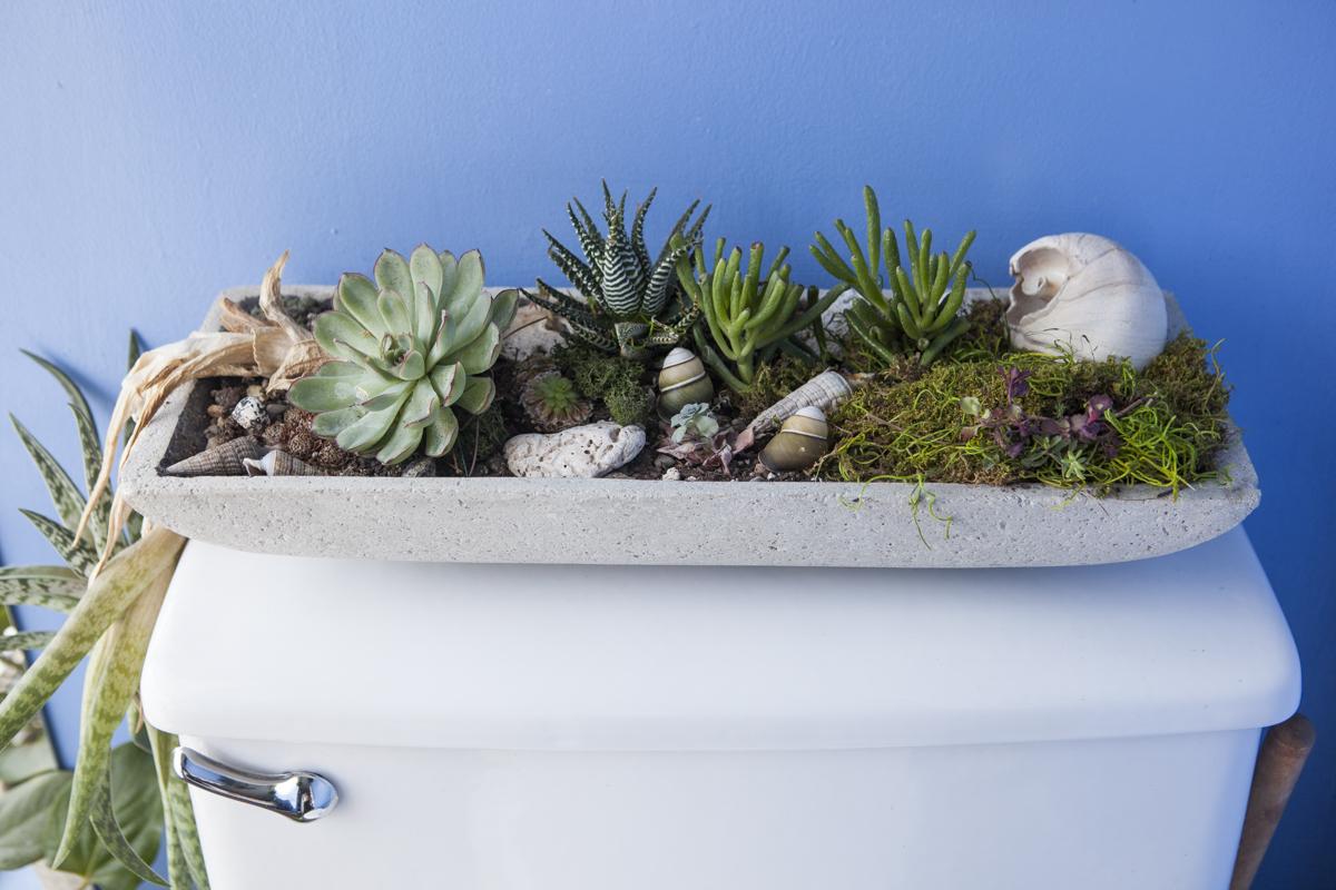 plantes wc
