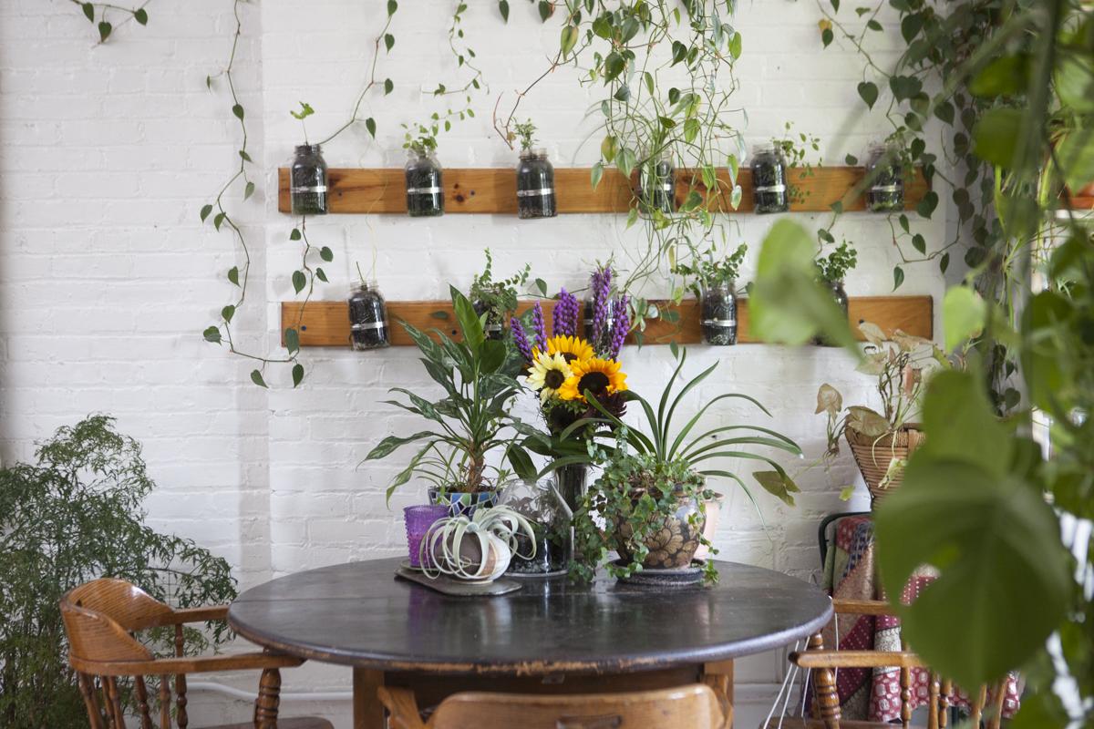 salle à manger plante verte